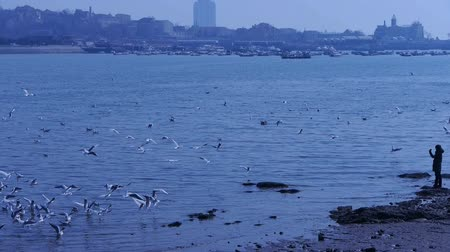 inseparable : Many seagull flying in sea,reef,Seaside dams of QingDao city,a person standing on beach.