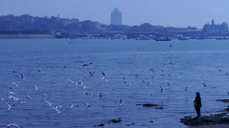 inseparable : A woman feed seagulls at beach,Many seagull flying in sea,reef,Seaside dams of QingDao city. Stock Footage