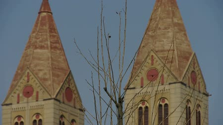 torre sineira : Panoramic of Qingdao Catholic Church & tree. Stock Footage