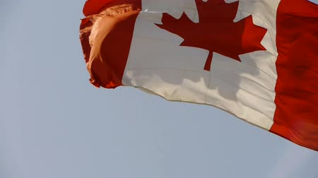 acer : Canada flag is fluttering in wind.