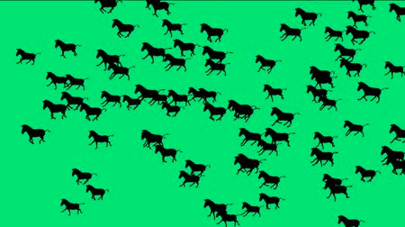 az emberi bőr : a group of horses silhouette running with green screen.