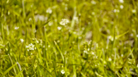small park : Beautiful wild flowers in grass. Stock Footage