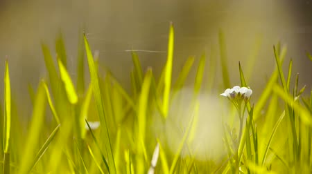 morning : Beautiful wild flowers in grass,Cobwebs spiders. Stock Footage
