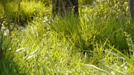 pasture land : Beautiful wild flowers in grass. Stock Footage