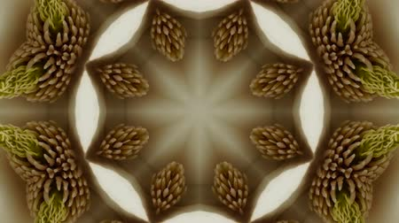 jardim : Beautiful magnolia bloom Kaleidoscope.pattern,four consecutive,illustration,cartoon,fractal,art.