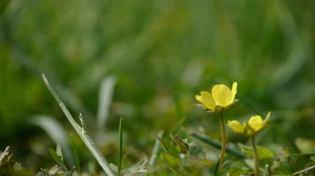 soft earth : Beautiful wild flowers in grass. Stock Footage