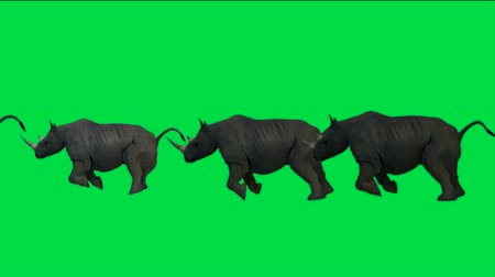 espécies : rhino running with green background.