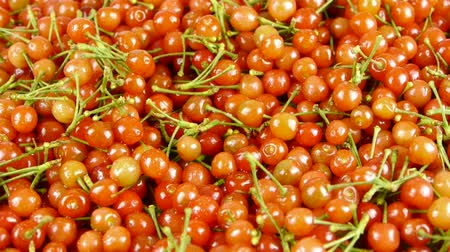 üretmek : Fresh cherries. Stok Video