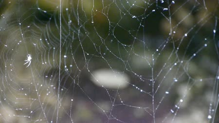 gota de orvalho : spider web cobwebs beside streams water. Stock Footage