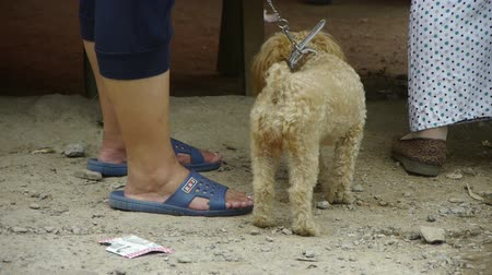 pariah dog : Puppy dog on side of road,Chinas urban bazaar town.