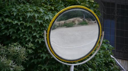 növelni : Car pass by traffic mirror relying on the leafy green wall. Stock mozgókép