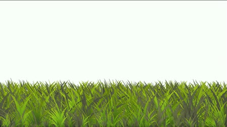 springtime : grass. Stock Footage