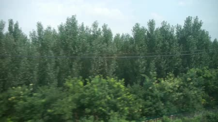 vyhlídkové : Dense green woods forest in rural countryside.Speeding train travel,scenery outside window.