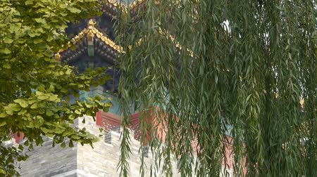 saçak : Ancient city Great Wall texture.roof of Forbidden City palace.Weathering of masonry.Crown of ginkgo tree & willow.