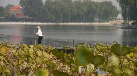 peking : fisherman on boat,Vast lotus leaf pool in autumn beijing & lake bridge railings.