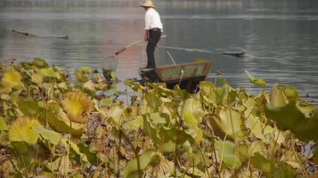 peking : Vast lotus pool,Fisherman on boat clean lake in beijing.