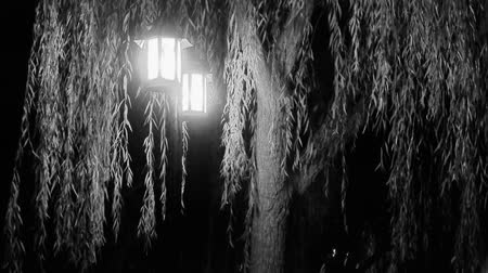 sokak lâmbası direği : willow tree & street lights at quiet night.black & white style.