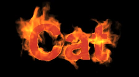 engulfed : flame cat word,fire text.
