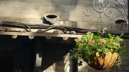 saçak : Flower pots under old house eaves with soft sunny.