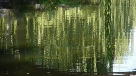 отражать : willow reflection in lake,moving water waves. Стоковые видеозаписи