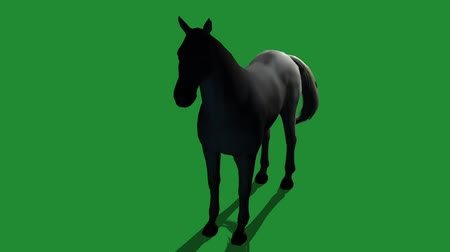 horserace : Black horse foal pet,farm animal wild life silhouette profile.beautiful spirit.