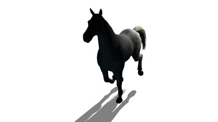 horserace : Black horse foal pet running,farm animal wild life silhouette profile.beautiful spirit.