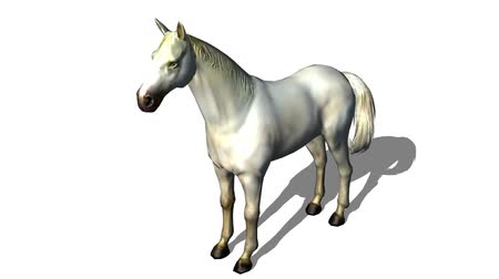 contornos : White horse foal pet,farm animal wild life.z1 x2 c3=White horse foal pet,farm animal wild life.beautiful spirit.