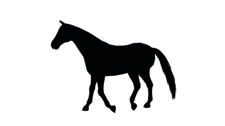 cavalinho : Black horse foal pet running,farm animal wild life silhouette profile.beautiful spirit.
