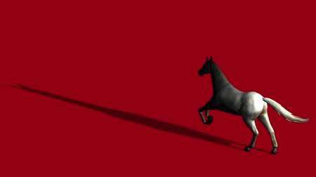 horserace : White horse foal pet running,farm animal wild life silhouette profile.beautiful spirit.