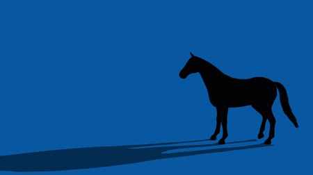 horserace : Black horse standing kicks,farm animal wild life silhouette profile.beautiful spirit.