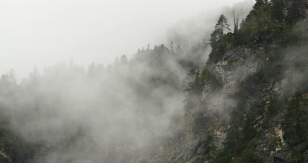 enevoado : mountain mist rising in the morning,fog pine trees,such as wonderland. Bomi County in Tibet,the largest precipitation area in China.
