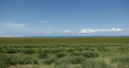 саванна : 4k far away wide prairie,white puffy cloud mass rolling over blue lake,Qinghai lake,China.