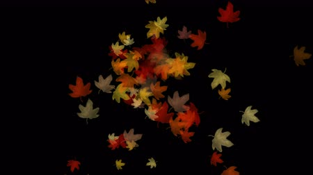 проливая : 4k Maple leafs falling & flare light, Maple leaves autumn fall romantic drift particle artistic.