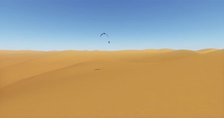 west wing : Eagles hovering over the desert  sand dunes,birds shadow are projected in the desert. Stock Footage