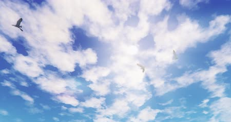 ptak : Seagulls Flying Over Sunlight,sun rays  cloud,Paradise scene.