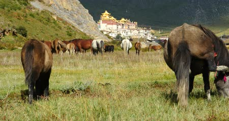 inculto : horse grazing in the meander river,clouds mass rolling over mountains,temple on the foot of hill.