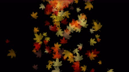 проливая : Maple leafs falling  flare light,Maple leaves autumn fall romantic drift particle artistic. Стоковые видеозаписи
