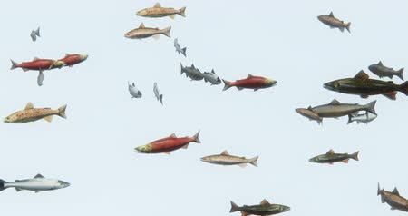fly fish : a group of fish swimming,3d cartoon,animal.