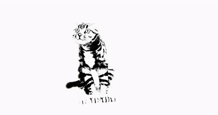 tabby cat : Cat sits  lick its body,3d cartoon,lovely pet  kitty,animal silhouette. Stock Footage