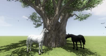 animalthemes : white horse  black horse under big tree,butterfly  bird flying,float Dandelion,foal pet,farm animal wild life. Stock Footage