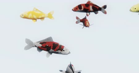 fly fish : a group of color fish swimming,3d cartoon,animal. Stock Footage