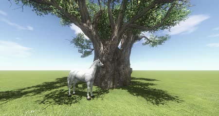 ranč : white horse under big tree,foal pet,farm animal wild life,beautiful spirit.