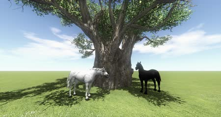 horserace : white horse & black horse under big tree,foal pet,farm animal wild life,beautiful spirit. Stock Footage