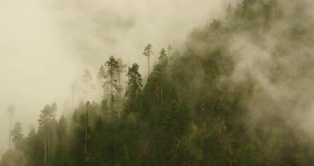 rejtekhely : time lapse of mountain mist rising in the morning,fog pine trees,such as wonderland.Bomi County in tibet,the largest precipitation area in China.
