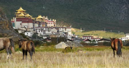 shangri la : horse grazing in the meander river,clouds mass rolling over mountains,temple on the foot of hill.