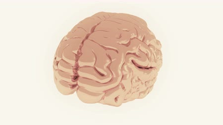 stroke : rotating brain model,artificial intelligence.