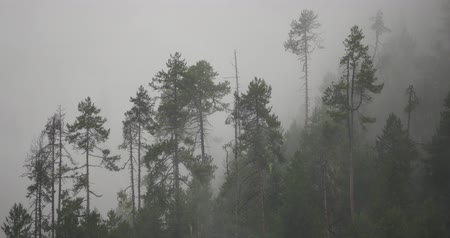 rejtekhely : mountain mist rising in the morning,fog pine trees,such as wonderland.Bomi County in tibet,the largest precipitation area in China.