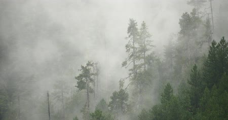 rejtekhely : mountain mist rising in the morning,fog pine trees,such as wonderland. Bomi County in tibet,the largest precipitation area in China.