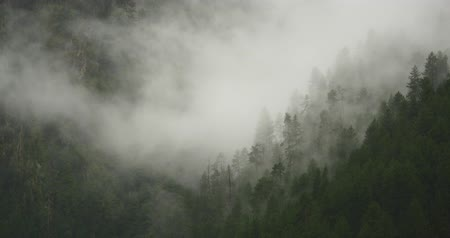 rejtekhely : 4k mountain mist rising in the morning,fog pine trees,such as wonderland.Bomi County in tibet,the largest precipitation area in China.