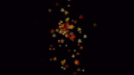 проливая : Maple leafs falling & flare light,Maple leaves autumn fall romantic drift particle artistic.